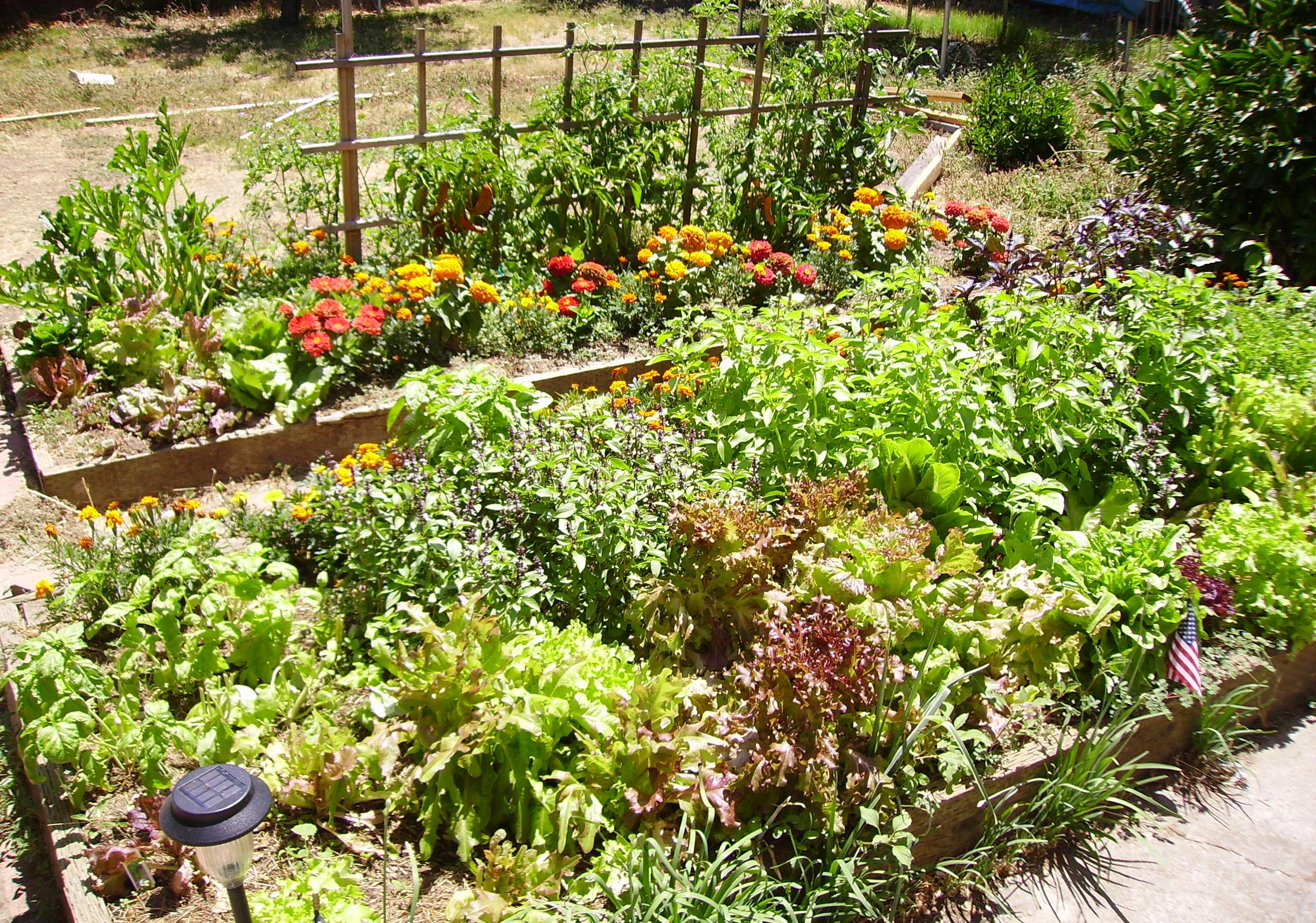 gardening tips for beginners u2013 free gardening tips