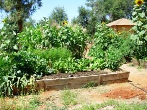organic garden 3
