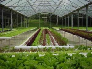 Hydroponics Garden 1