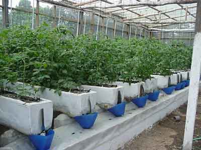 Introduction to Hydroponics Free Gardening Tips