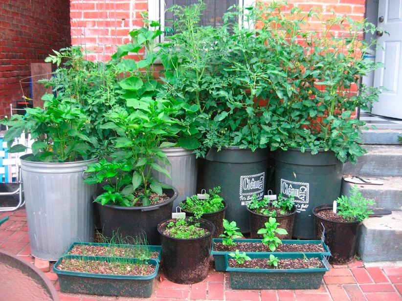 container vegetable garden. Container Garden.3 Vegetable Garden G