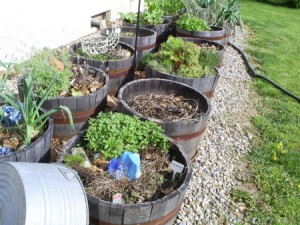 container garden.4