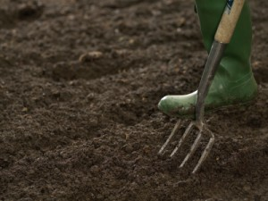 Providing Your Vegetable Garden with the Best Soil Possible Free